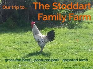 Stoddart Family Farm | Grassfed Beef | Pastured Pork | Kawartha Lakes, Ontario | AmandaNaturally.com
